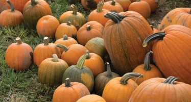 American West Heritage Center will host Fall Festival, Fall Harvest Days in October