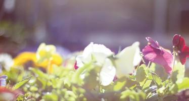April planting brings May flowers
